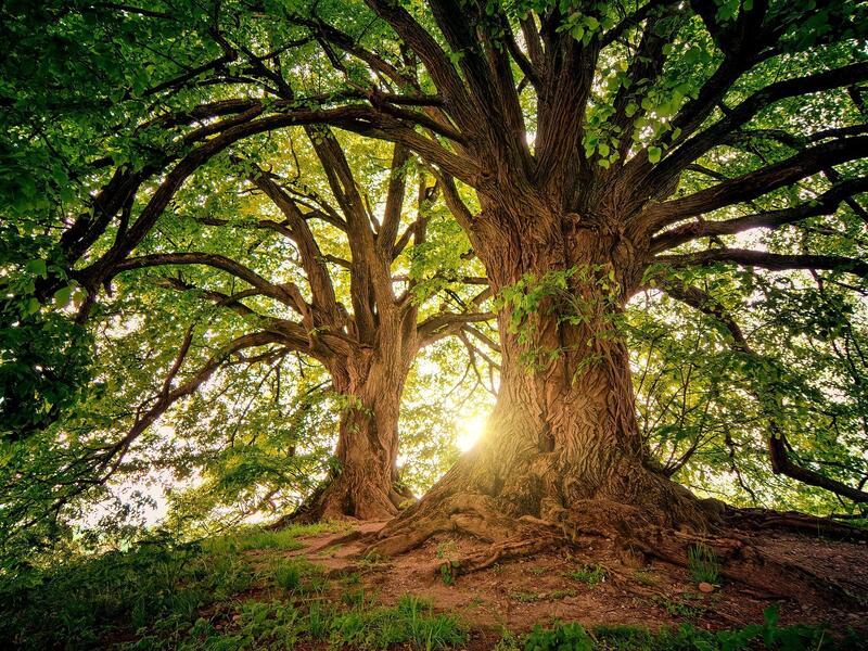 """Bei uns ist nicht nur das Logo grün. - """"100 Bäume für das Klima"""""""